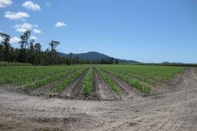 Picture of LOWER TULLY QLD 4854