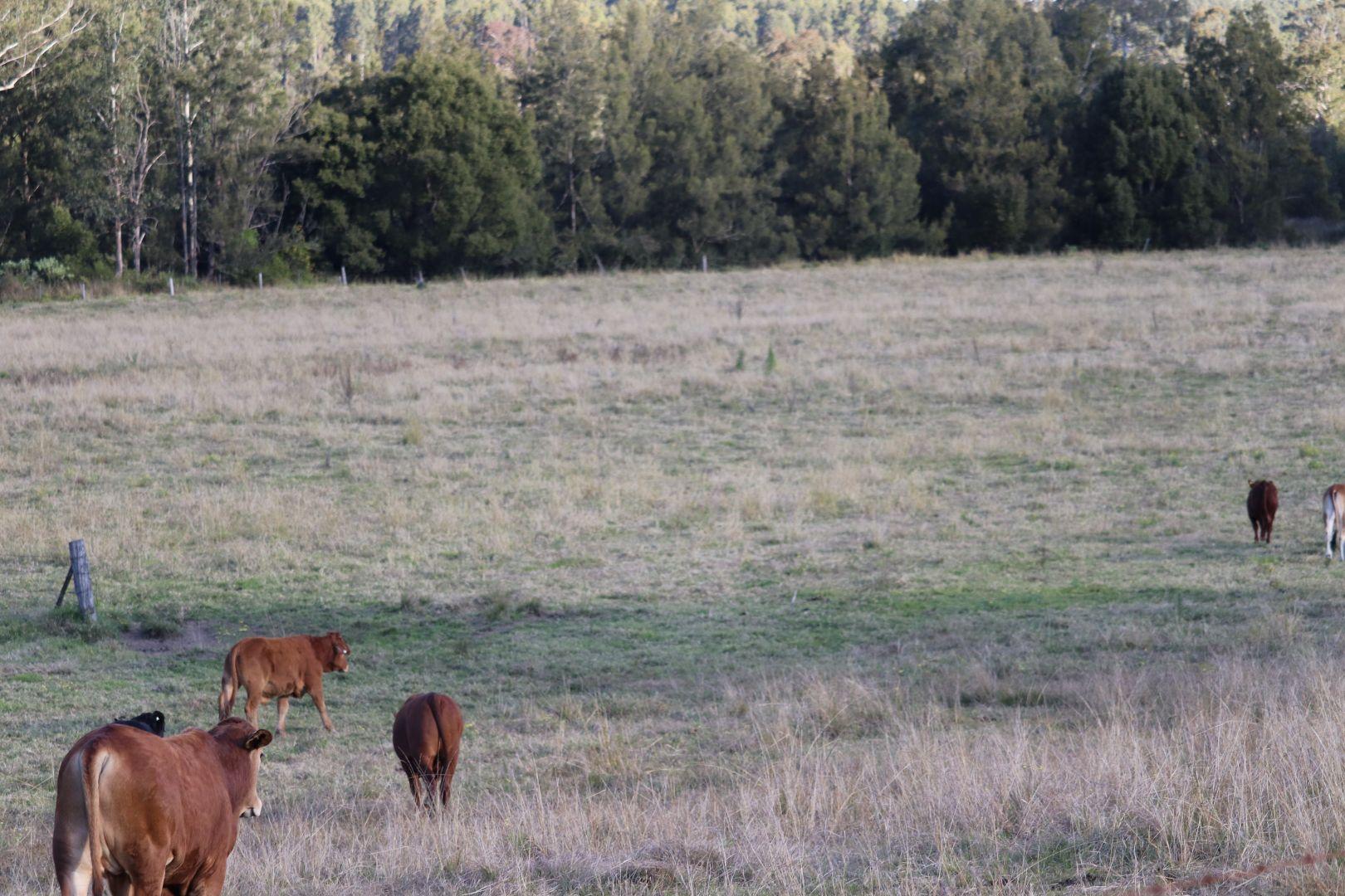 83 Farm Road, Bonalbo NSW 2469, Image 2