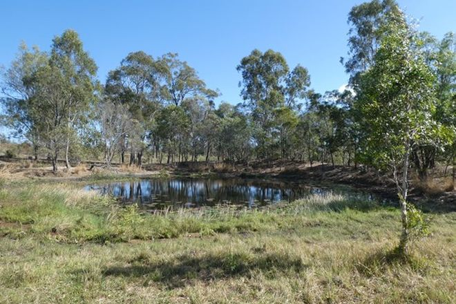 Picture of GOLDEN FLEECE QLD 4621