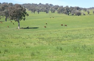 Picture of 1350 Hume Highway, Tarcutta NSW 2652