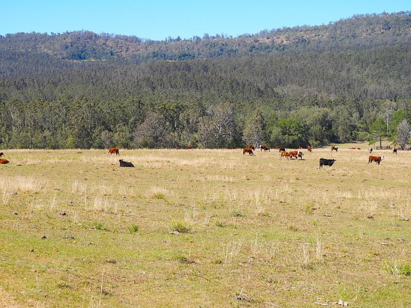 408 Farm Road, Lower Peacock NSW 2469