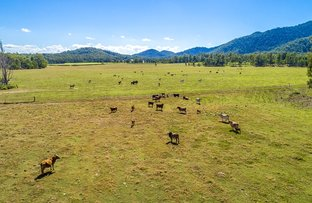 Picture of 54 Tram Road, Gundiah QLD 4650