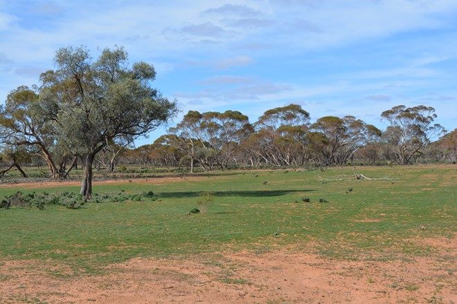 Picture of WYOMING STATION, POONCARIE NSW 2648