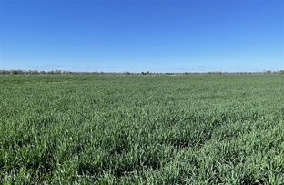 Picture of 'Merriwee' 1262 Floddenfield Road, Coonamble NSW 2829