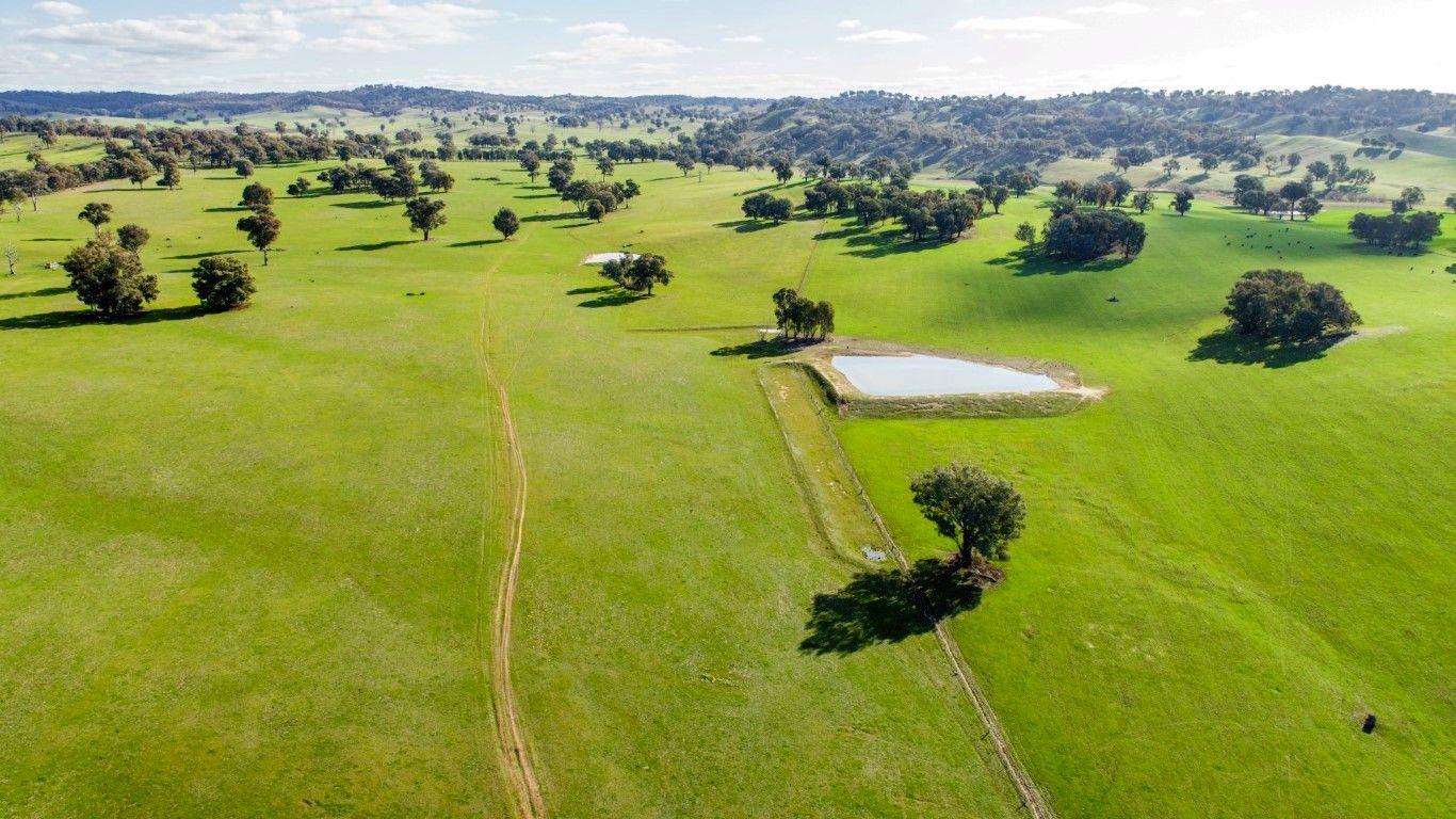 1532 Humula Rd, Tarcutta, Wagga Wagga NSW 2650, Image 1