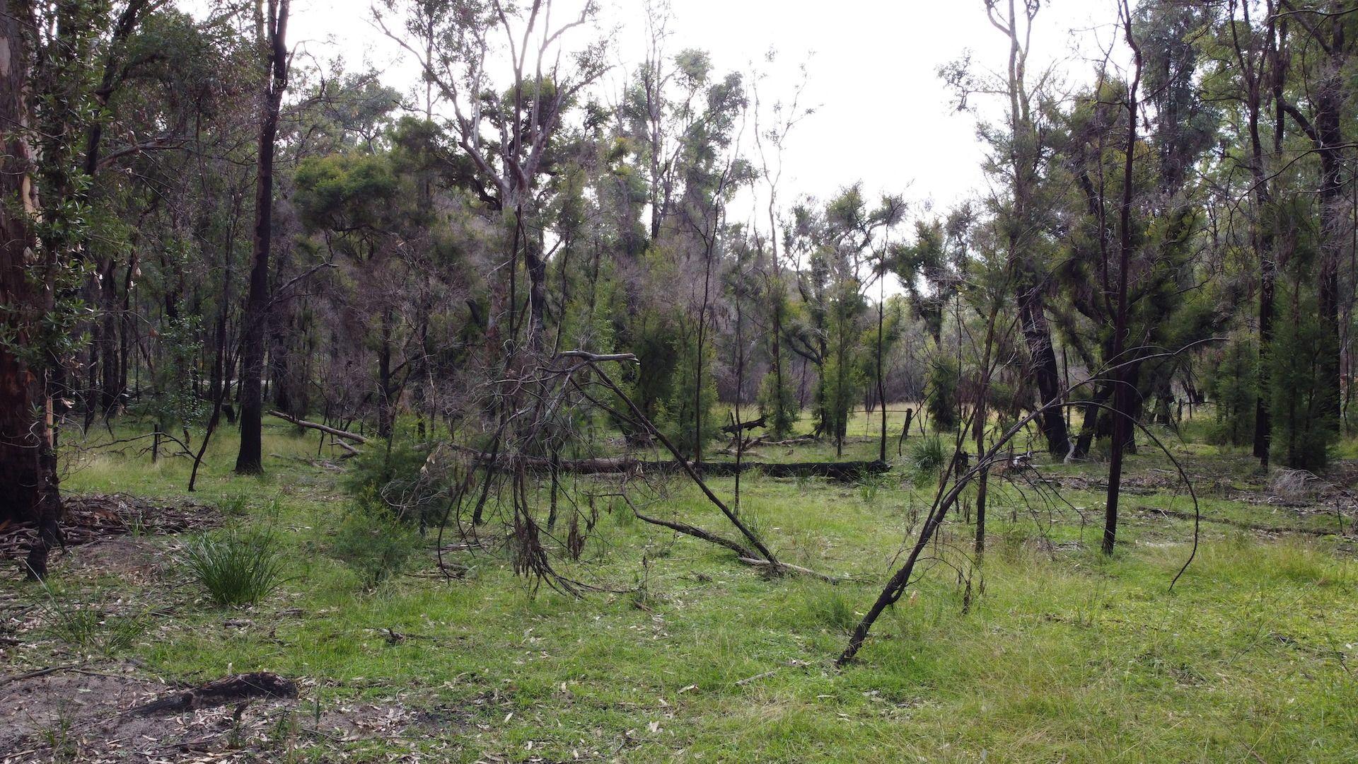 Lot 3 Putty Road, Putty NSW 2330, Image 0