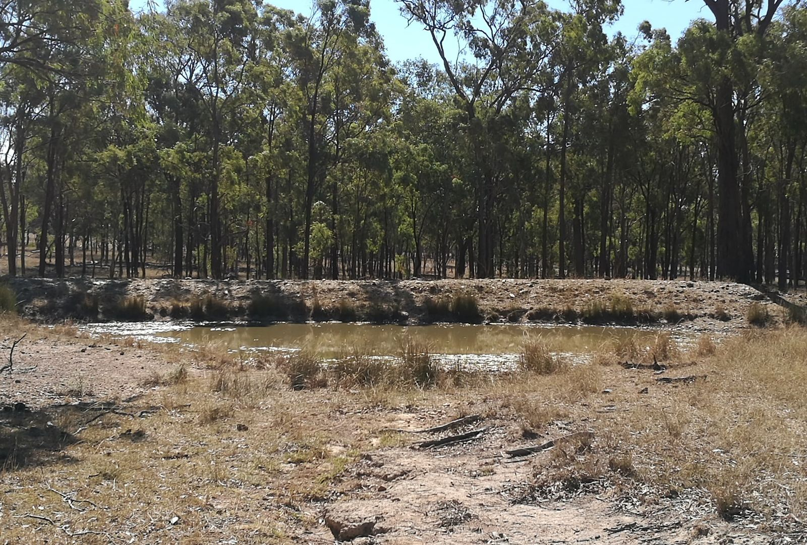 297 Reedy Creek Rd, Thanes Creek QLD 4370, Image 1