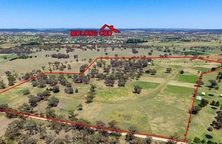 Picture of 00 Euchareena Road, Molong NSW 2866
