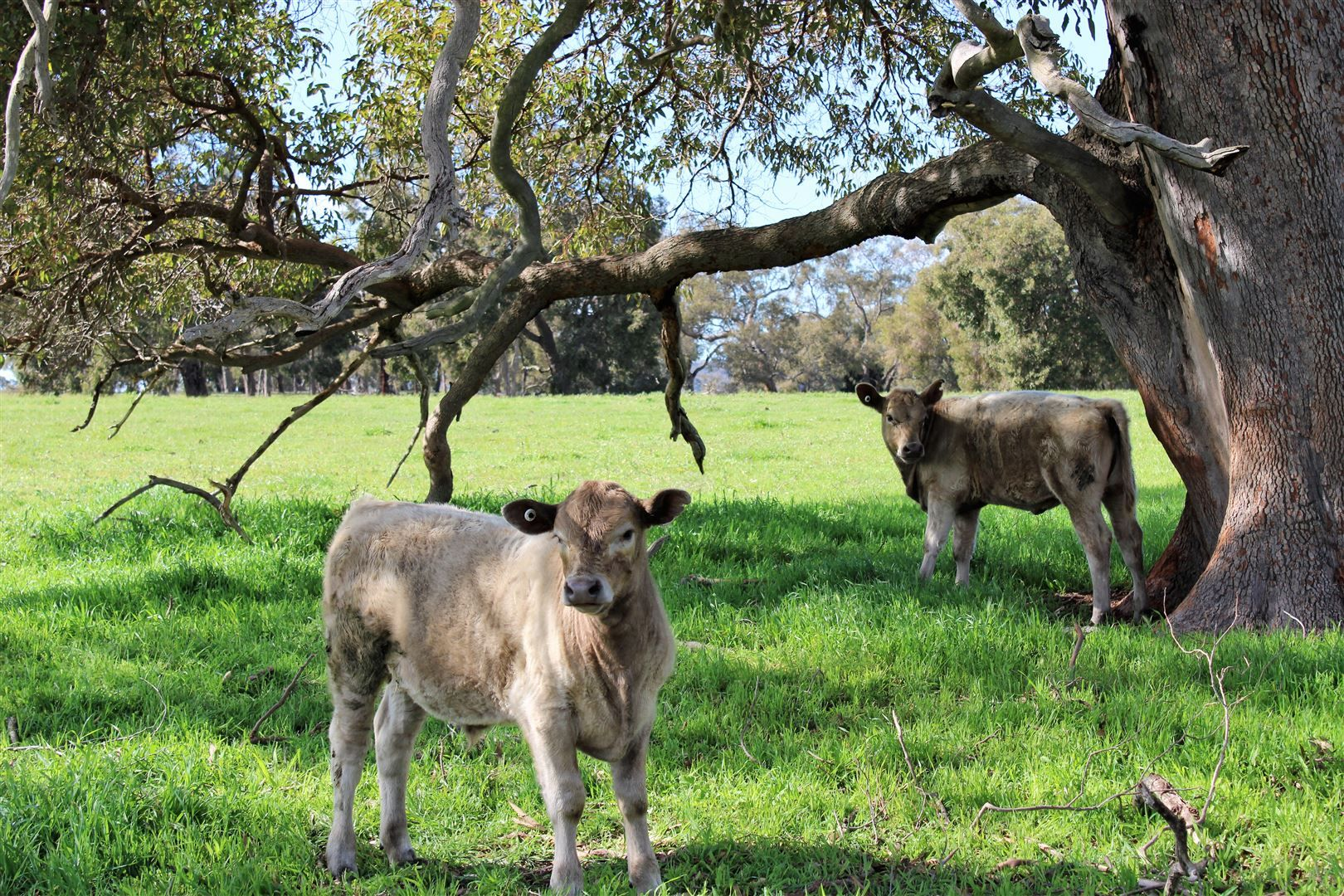 896 Red Gully Rd, Red Gully WA 6503, Image 0