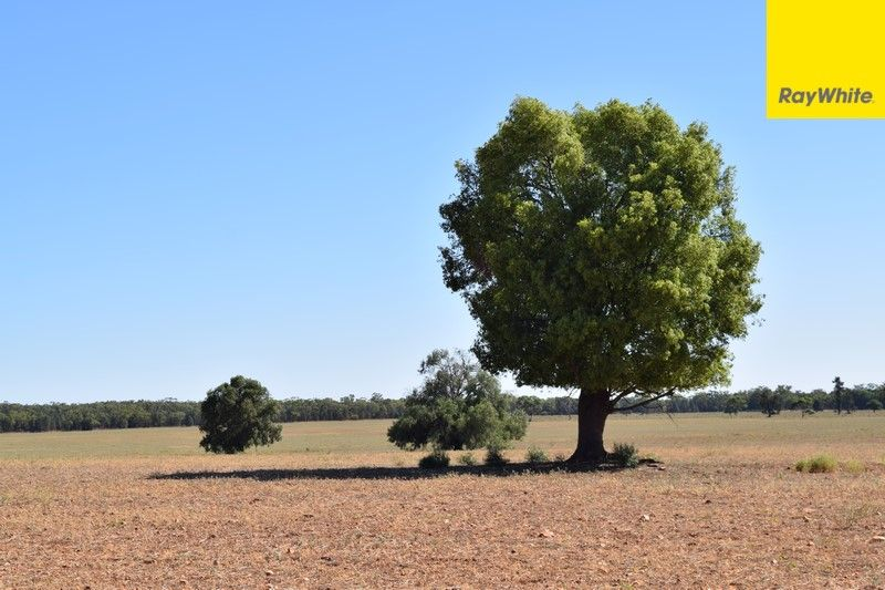 The Ranch Grassmere Road, Condobolin NSW 2877, Image 2