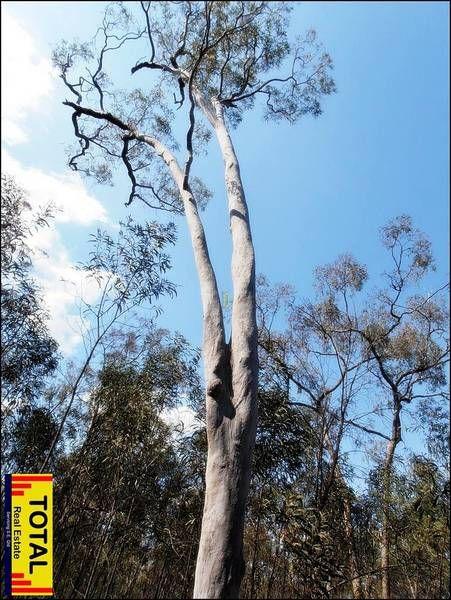 33 Cabbage Gum Drive, Millmerran Woods QLD 4357, Image 0