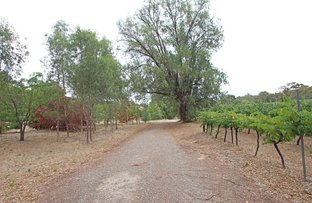 Picture of Lot 14 WENDOUREE ROAD, Clare SA 5453