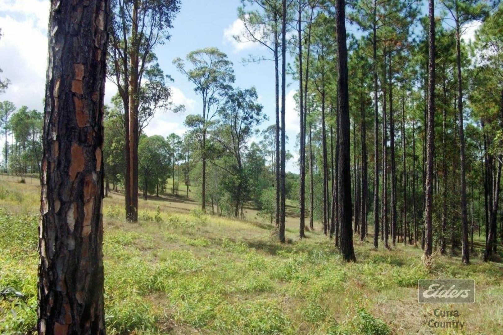 Lot 104 Arborthree Road, Glenwood QLD 4570, Image 0