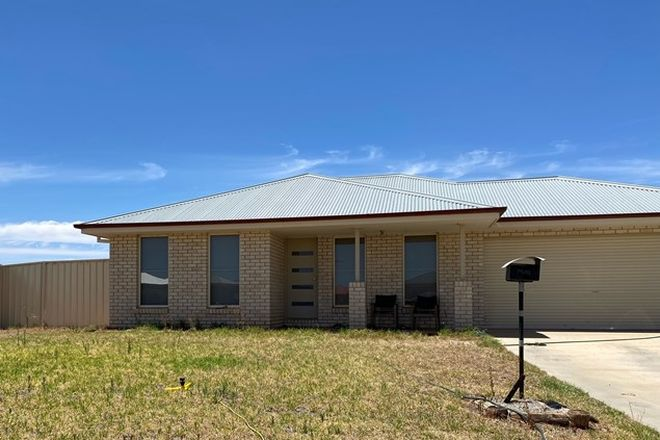 Picture of 11 HAINES STREET, GRIFFITH NSW 2680