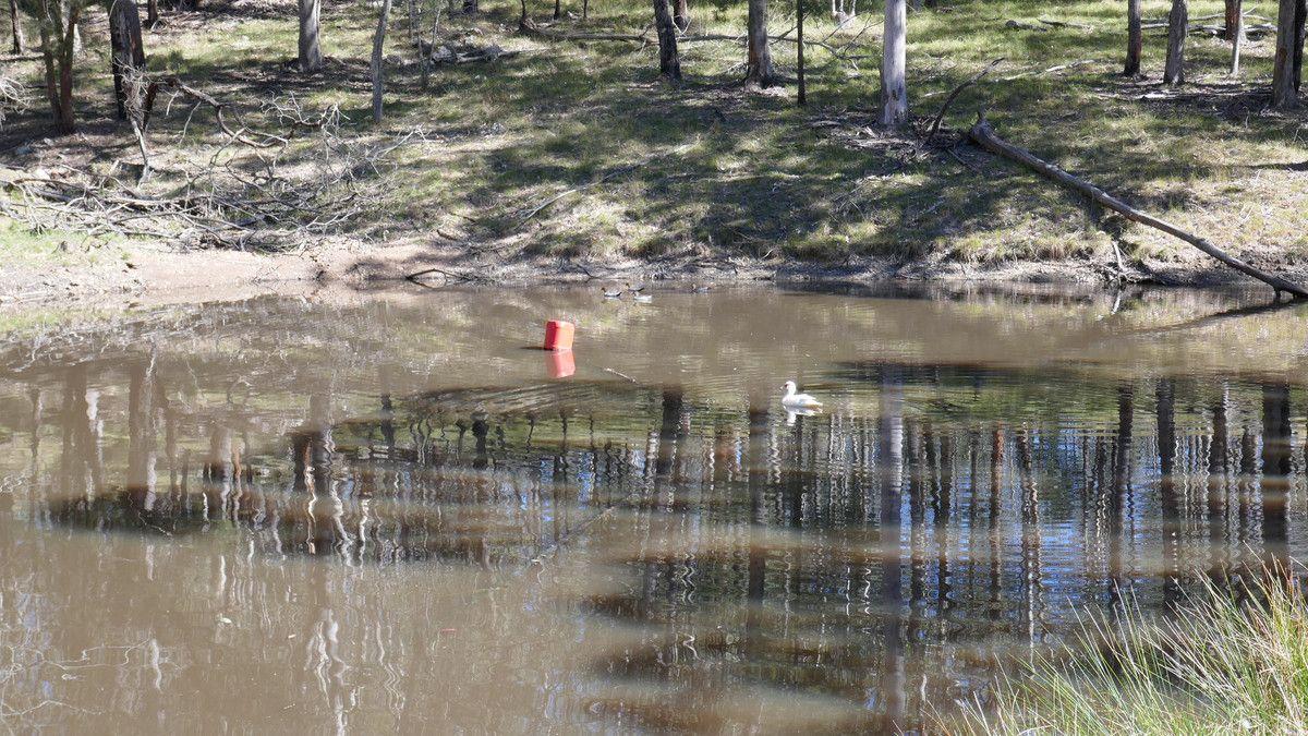 474 Long Gully Road, Drake NSW 2469, Image 2