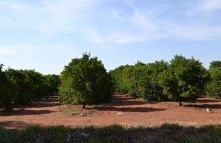Picture of Farm 1233 Payten Road, Corbie Hill, Leeton NSW 2705