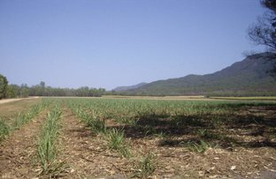 Picture of El Alamein Road, Abergowrie QLD 4850