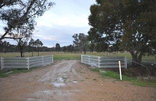 1/145 Molkentin Road, Jindera NSW 2642