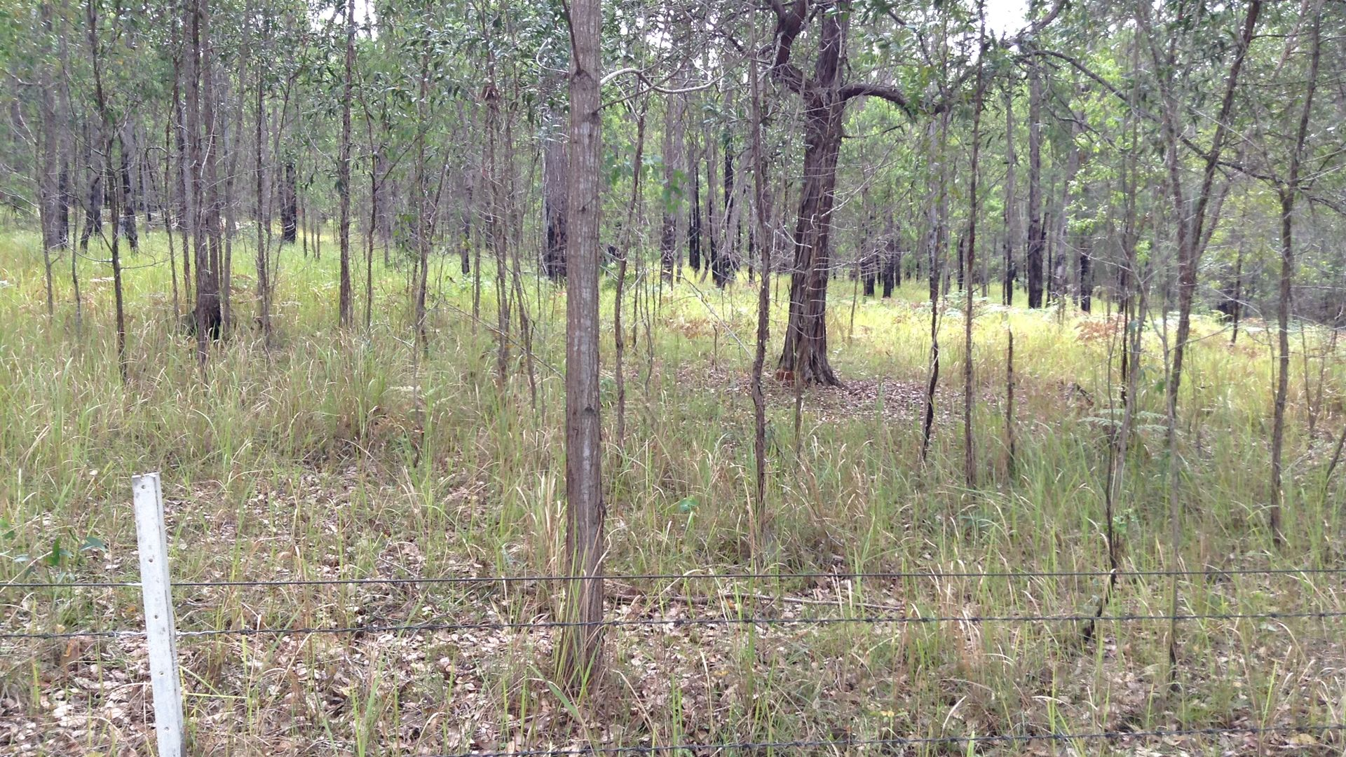 Lot 53 Upper Fine Flower Rd, Upper Fine Flower NSW 2460, Image 1