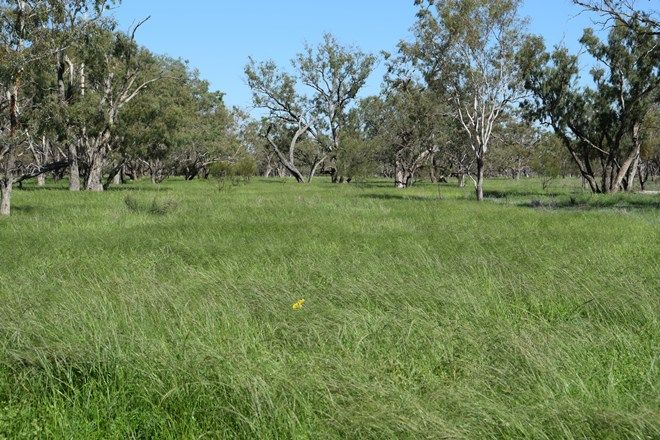 Picture of 'Guiseley' 2606 Gingie Road, WALGETT NSW 2832