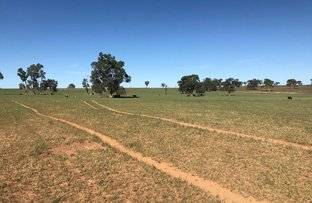 Picture of 117 Rosedale  Road, Turill NSW 2850