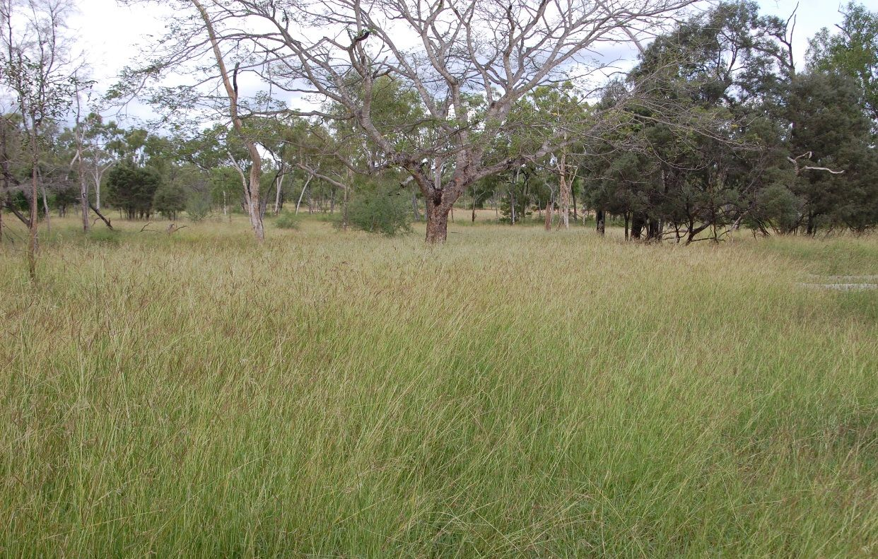 Red Bluff - Flinders Highway, Charters Towers, Black Jack QLD 4820, Image 2