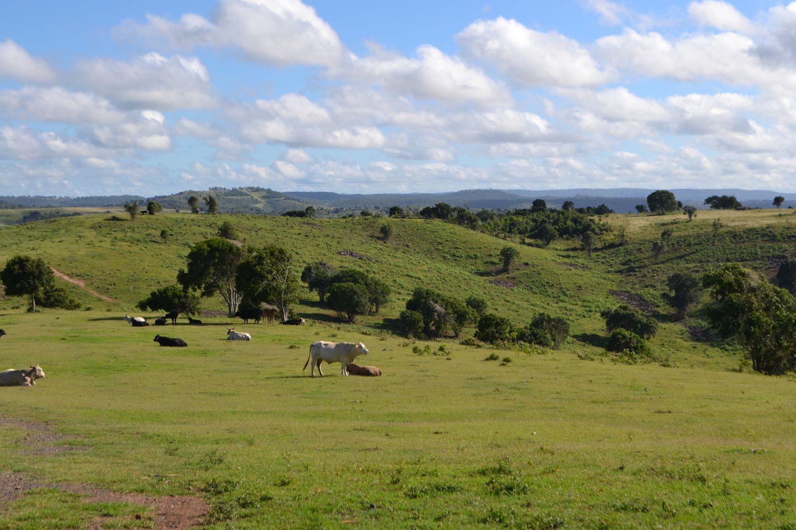 202 Dearling Road, Haden QLD 4353, Image 0