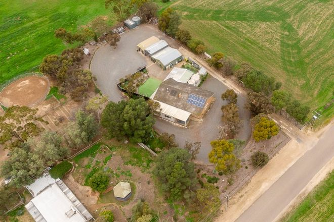Picture of 6 Horticultural Avenue, MURRAY BRIDGE SA 5253