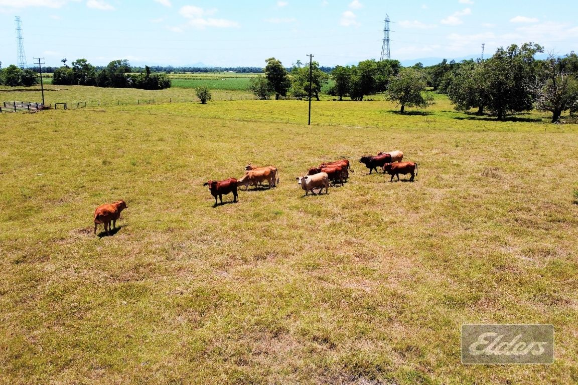 Lot 8 TULLY GORGE ROAD, Tully QLD 4854, Image 1