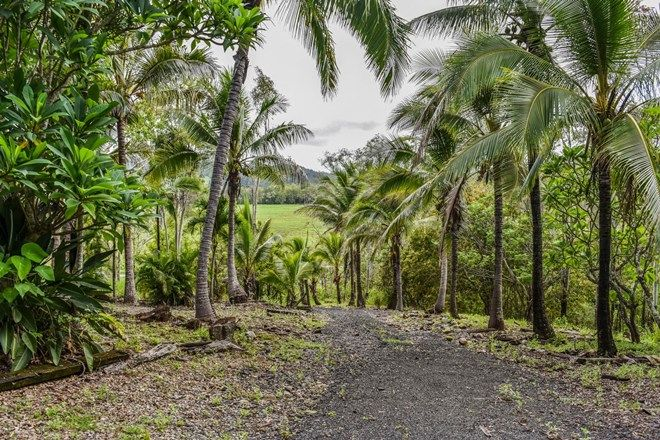 Picture of 1707 Yakapari Seaforth Road, MOUNT JUKES QLD 4740