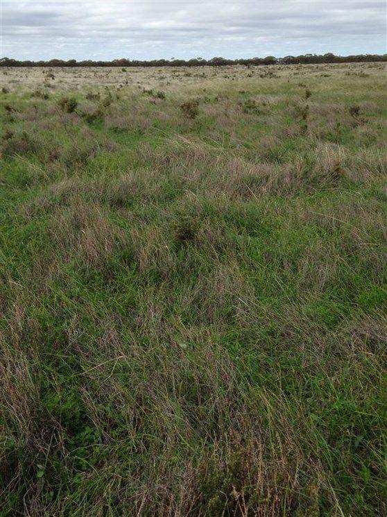 Lot 91 Foote Road, Eudunda SA 5374, Image 2