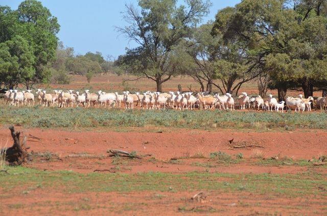 "* ""Bulgoo"" Incorporating ""The Meadows"", Cobar NSW 2835, Image 2"