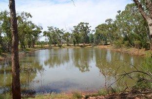 Picture of * El Trune, Cobar NSW 2835