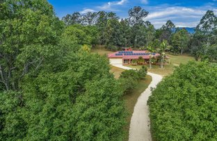 Picture of 7 Grey Gum Place, Beechwood NSW 2446