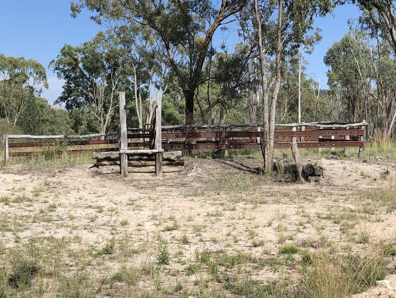 444 Wallangra Road, Ashford NSW 2361, Image 2