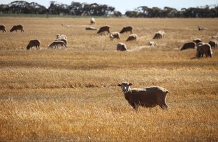 Picture of 3856 Kulkami, Lameroo SA 5302