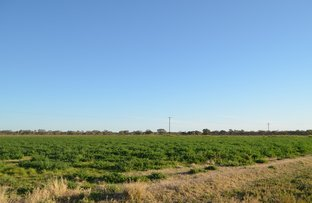 Picture of Brewarrina NSW 2839
