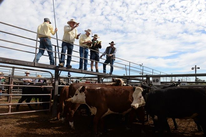 Picture of EXCESS SALE, COONABARABRAN NSW 2357