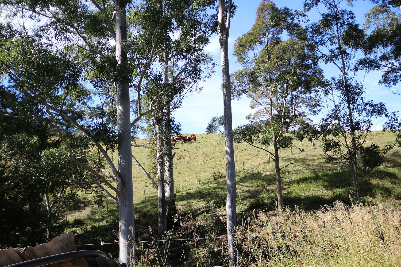 382 Hogans Road, Upper Lansdowne NSW 2430, Image 2