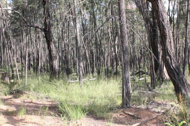 Picture of 8576 Black Stump Way, TAMBAR SPRINGS NSW 2381