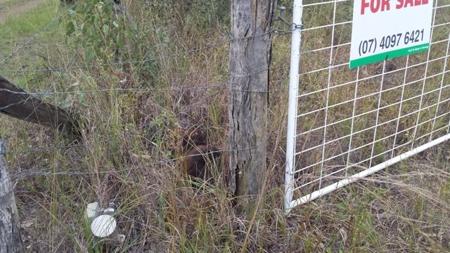 25 Dalrymple Drive, Millstream QLD 4888, Image 1
