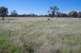 Picture of 6550 Cypress Way, Pilliga NSW 2388
