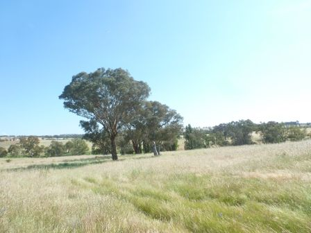 102 Brial Road, Boorowa NSW 2586, Image 1