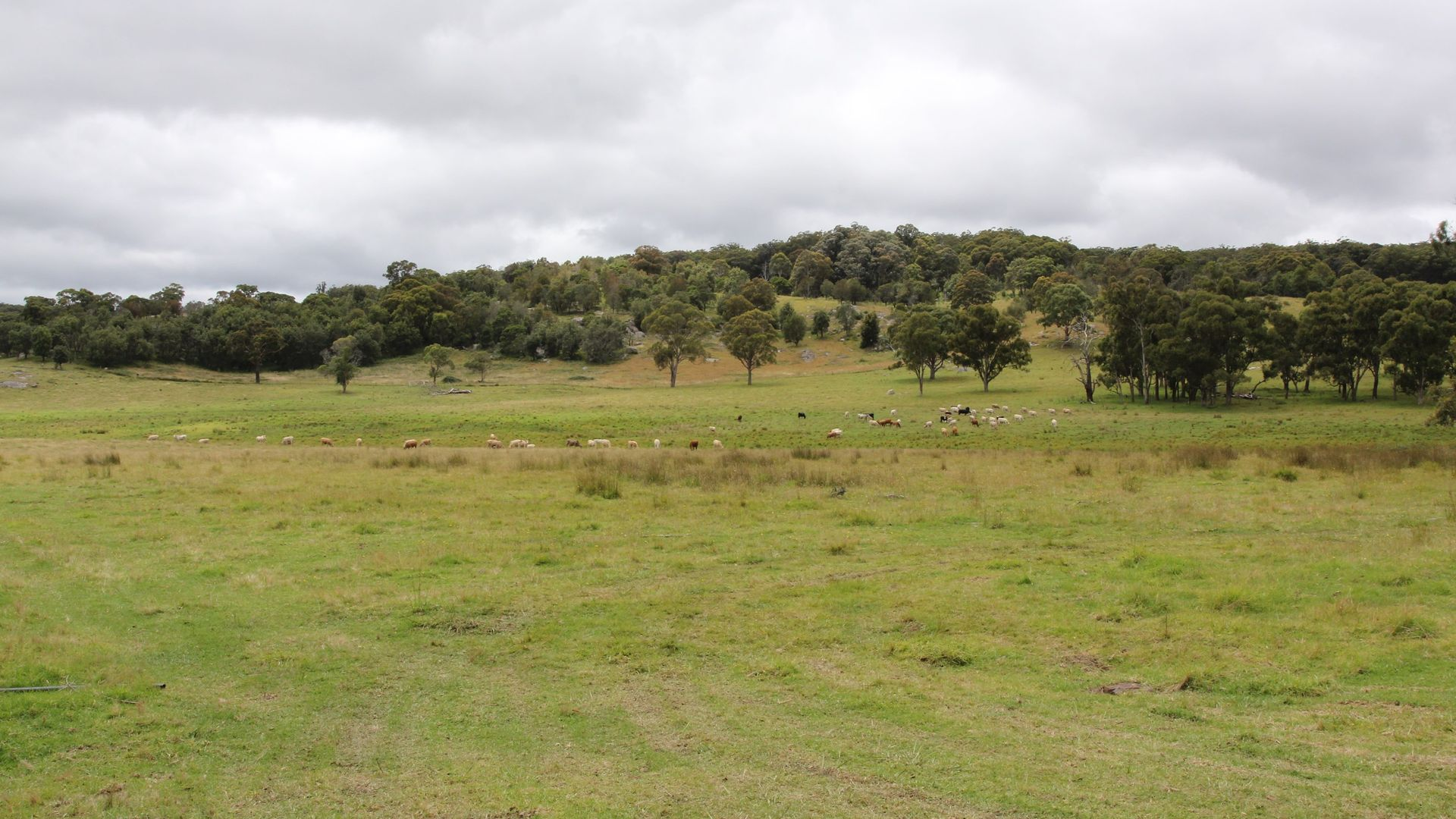 2875 Mount Lindesay Road, Tenterfield NSW 2372, Image 2