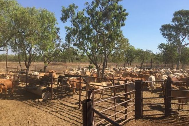 Picture of TARLEE STATION, LARRIMAH NT 0852